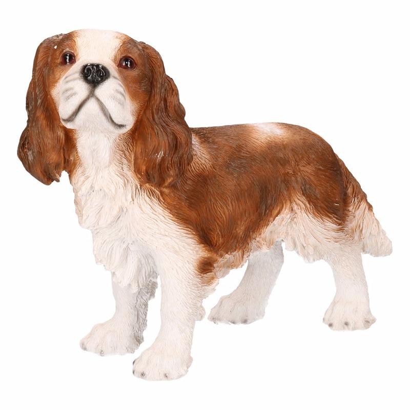hond bruin blauw ogen