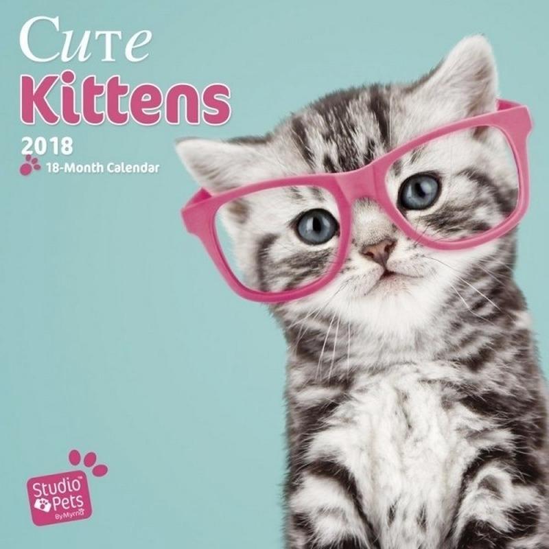 Katten/poezen kalender kittens studio 2018 . een luxe full colour kalender van 120 grams glossy papier met ...