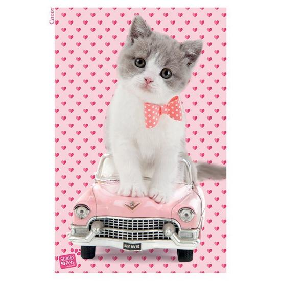Kitten katten poster 61 x 91,5 cm. grote poster met een afbeelding een kitten op een cadillac. de poster ...
