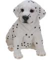 Honden beeldjes zittende Dalmatier 23 cm