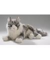 Luie liggende grijze katten knuffel