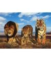 Poster wilde dieren katten 61 x 91,5 cm